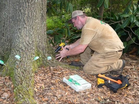 aiding the tree with fertilizers